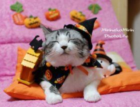ハロウィンヘアをもっと可愛く!