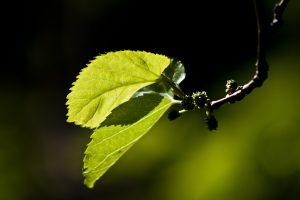 leaves-1865230_1920