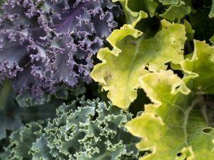 vegetables-940177_640