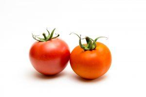 tomato-1620465_1920
